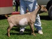 Goat Medications